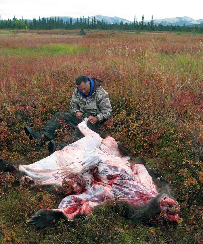 This Alaskan grizzly is unaware that it's not really dead, since it was shot with a push-feed rifle.